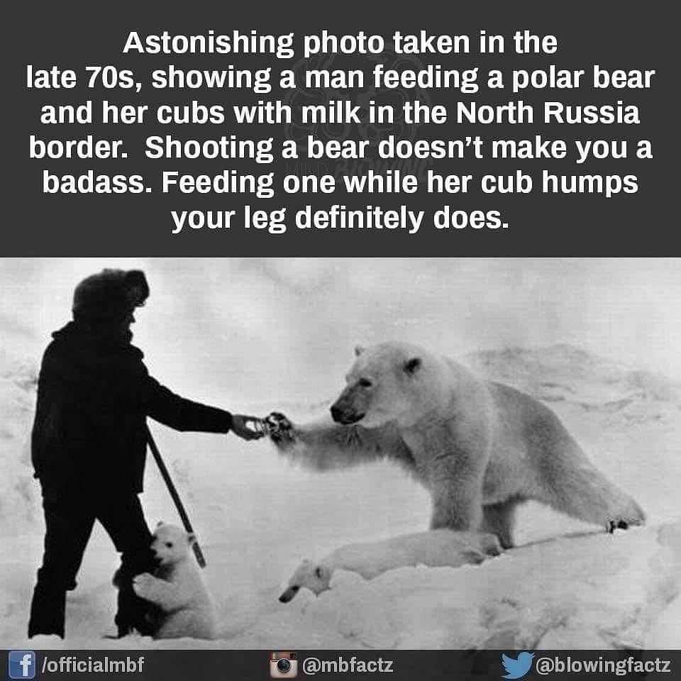 AnimalKingdom